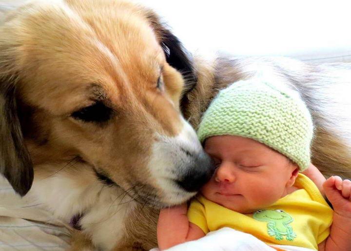 婴儿与宠物狗狗的相处之道六招,怀孕也不该把宠物送走