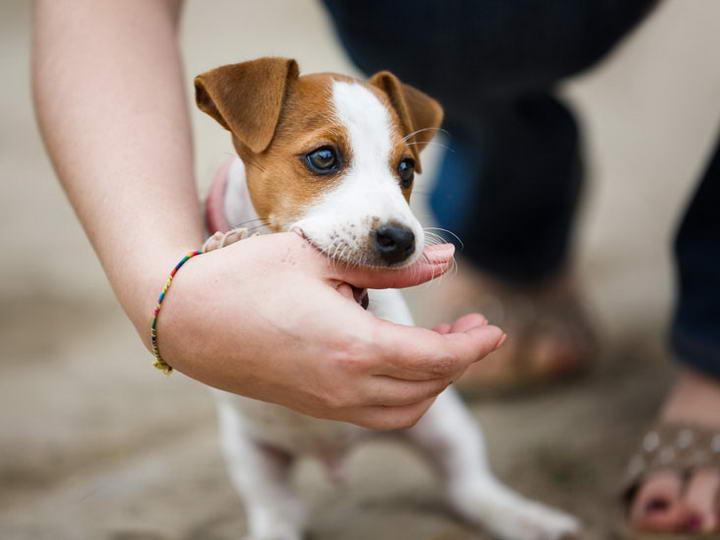 狗狗为什么总是咬人的手