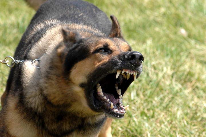 狗狗为什么总是吠叫,宠物狗叫一天的原因