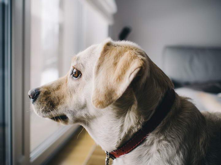 为什么狗狗会产生分离焦虑症行为