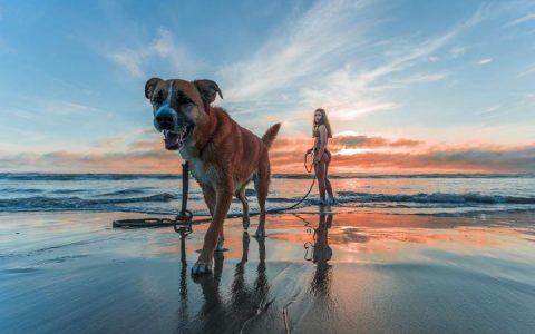 为什么狗狗出门后就很兴奋不受控制