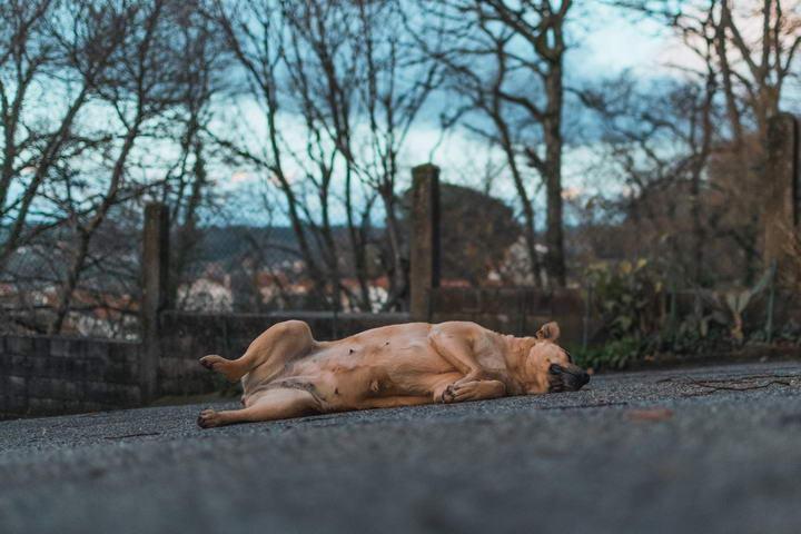 狗狗的四种睡眠障碍