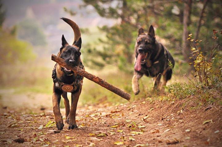 为什么狗狗遇到其他宠物狗会过度热情