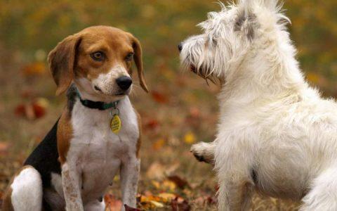 为什么狗狗对其他宠物狗不友善也不给闻