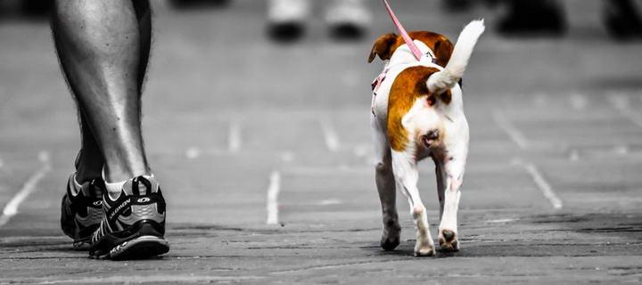 幼犬害怕出门怎么办,小狗不敢出门