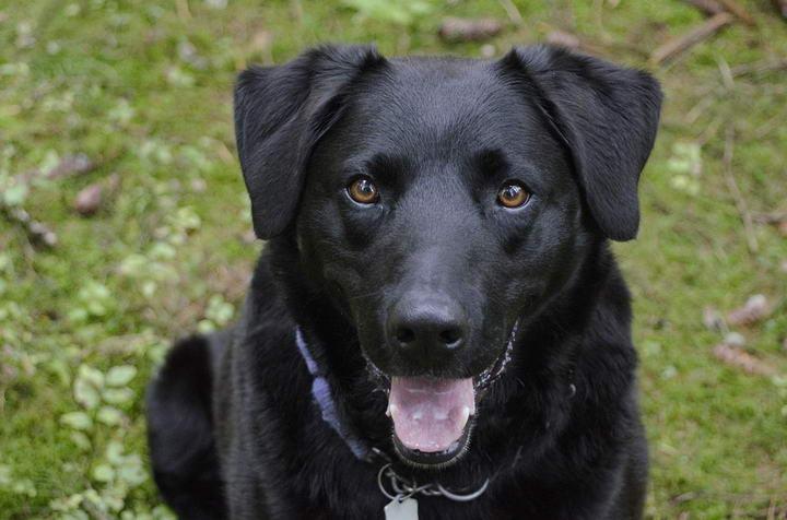 狗狗的眼睛也会说话
