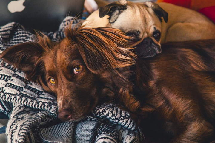 从狗狗互动的身体语言,简单看出狗狗个性!