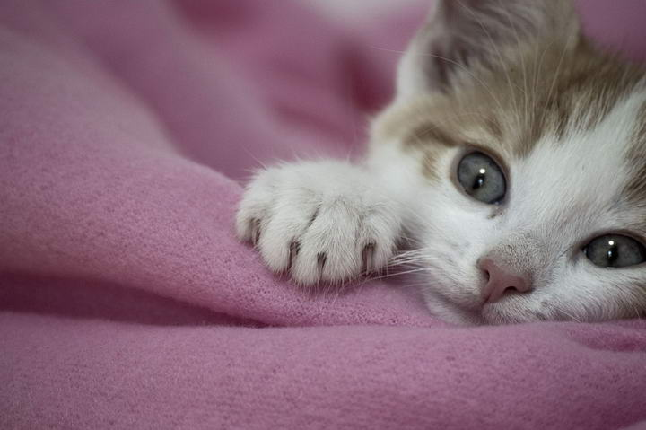 让幼猫擅长与人类及其它猫咪互动的训练技巧