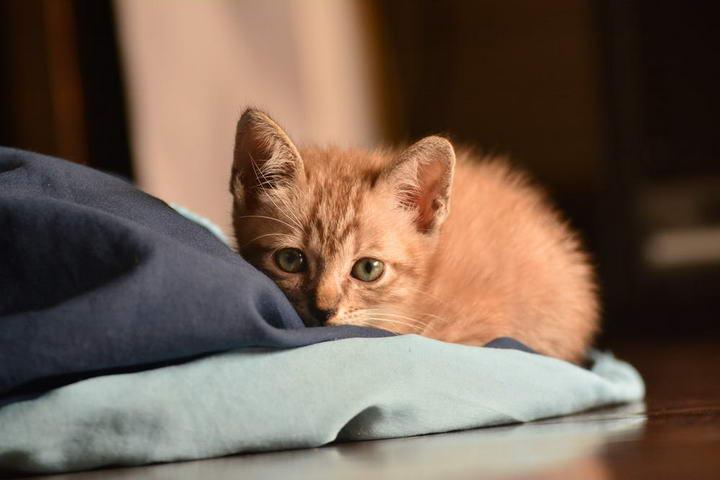 小猫咪来到你家的第一个月应该如何照顾