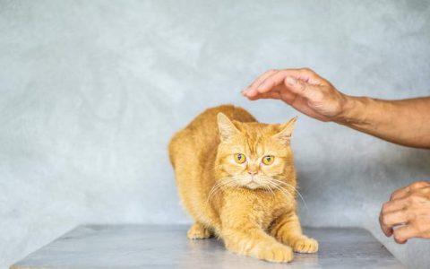 训练猫咪听指令的步骤