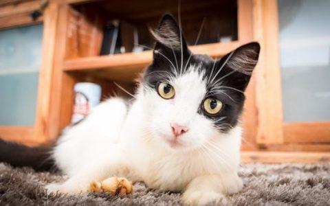 建立一个猫咪感到安全的居家环境
