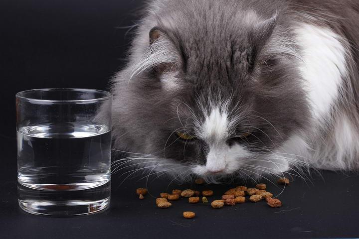 给猫咪换个口味:更换猫粮的小技巧
