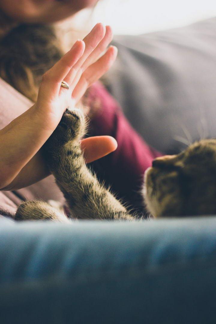 训练小猫服从性的技巧
