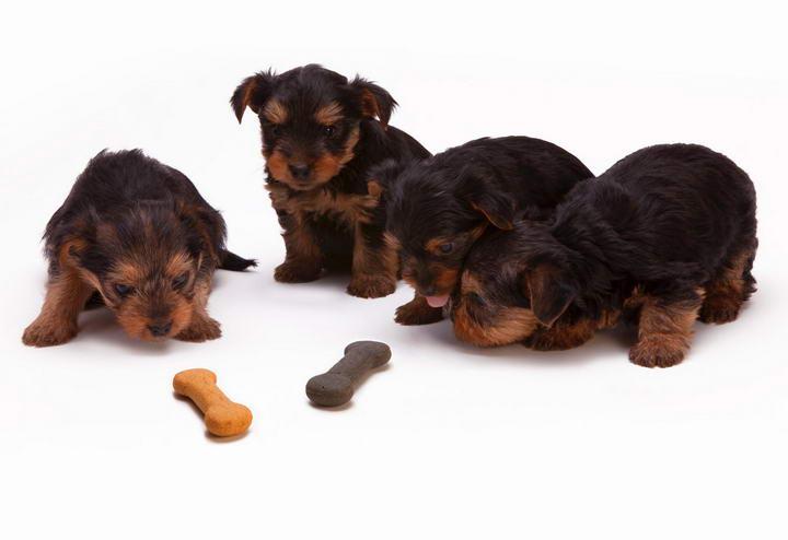 小狗喂食注意事项,为幼犬挑选狗粮