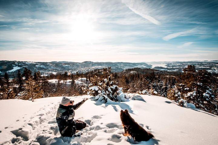 狗狗的冬日时光:确保狗狗在寒冷的天气里安全无虞