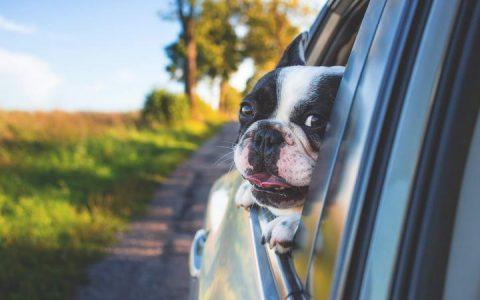 减少潮湿天气里狗狗在你车内的异味