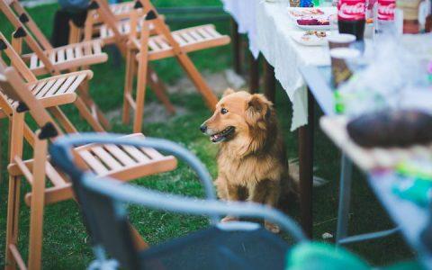 在新年春节等节假日聚会时保持你的狗狗舒适