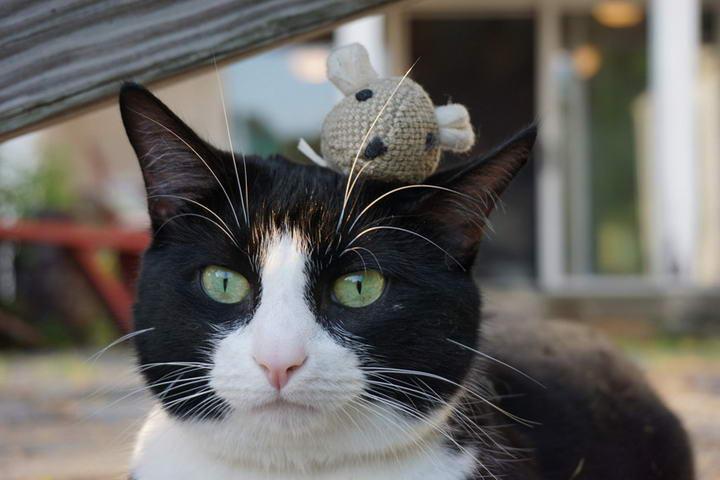猫咪须太长能不能剪?不能给宠物猫剪胡须