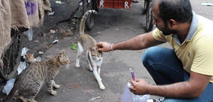 猫咪绝育有哪些好处