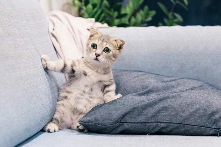 新领养猫咪如何熟悉家里原住民和小孩