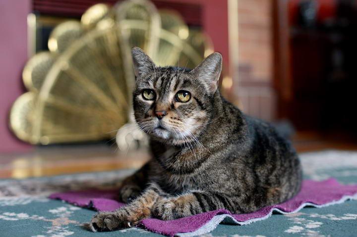 猫咪步入老年以后会出现哪些问题?