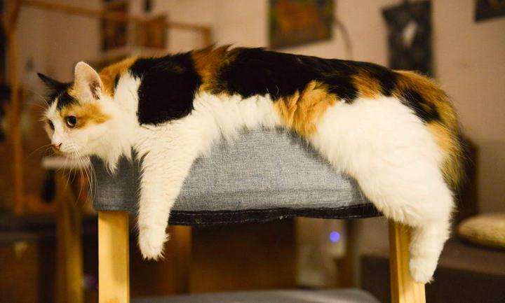 高龄猫的日常保健措施