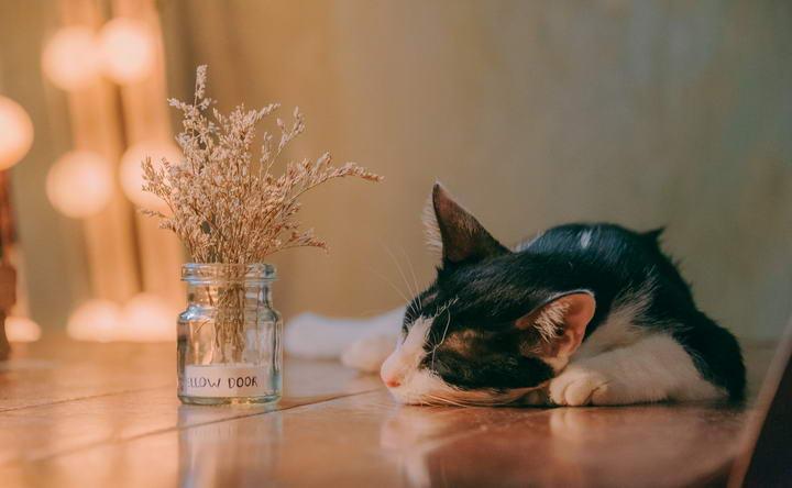 脑部老化对猫咪的影响