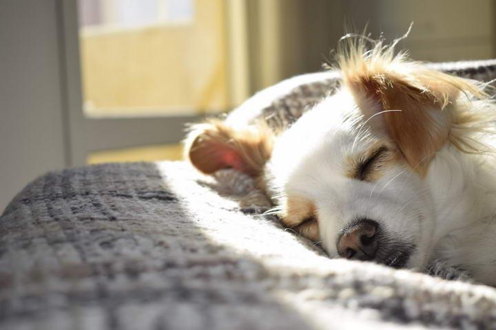 幼犬长到多大才算成年犬?