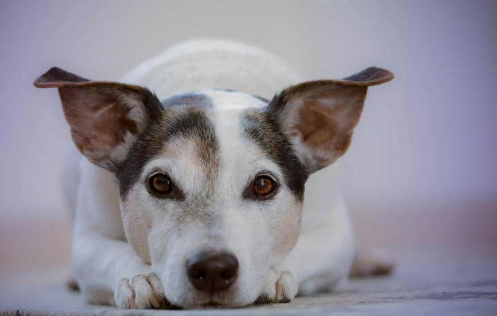 狗狗腹泻/拉肚子的症状、护理和预防