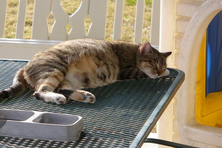 如何判断你的猫咪是否已经怀孕了?