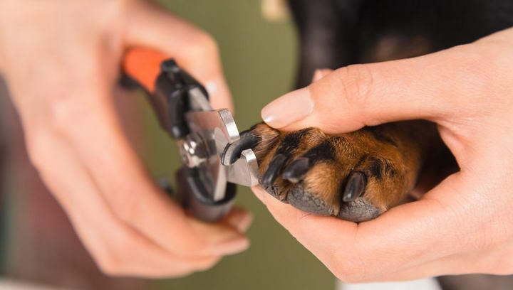 狗狗指甲受伤出血的应对措施