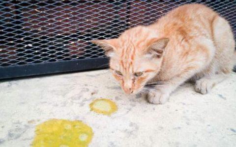 猫咪呕吐六大问题