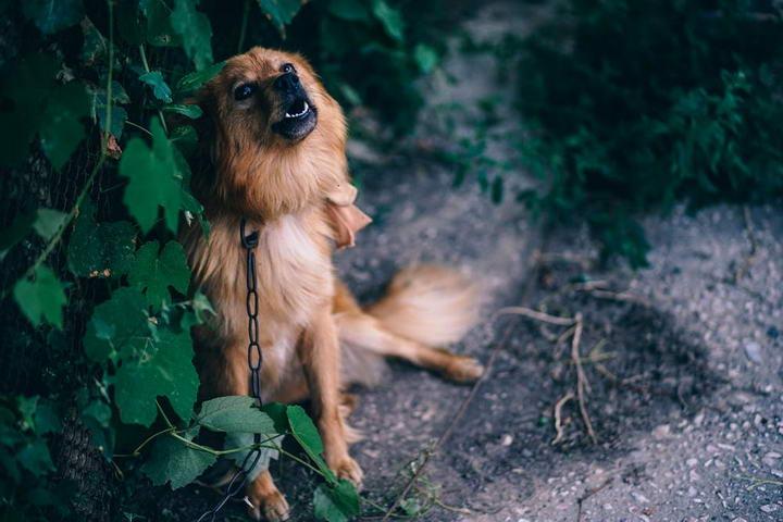 通过狗狗呕吐物颜色分析呕吐原因