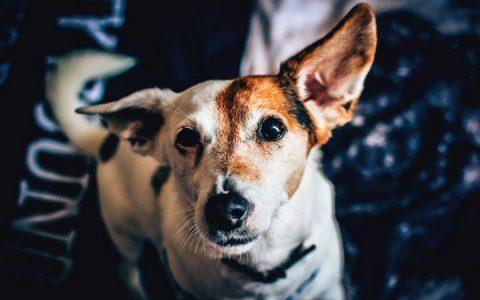 狗狗不同形状的粪便代表了什么问题?