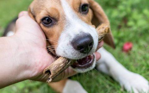 宠物猫咪和狗狗有眼屎是什么问题?