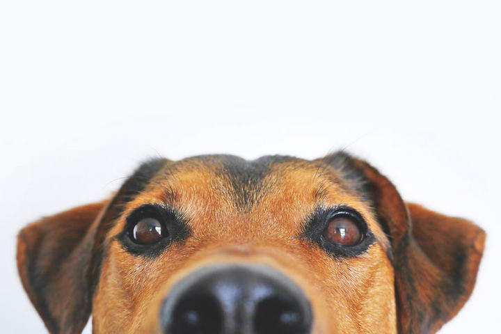 当宠物狗狗猫咪的鼻子上有鼻涕或者是打喷嚏需要引起你的注意