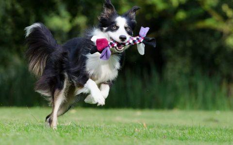 狗狗出门玩可能遇到的6种突发情况的应对措施