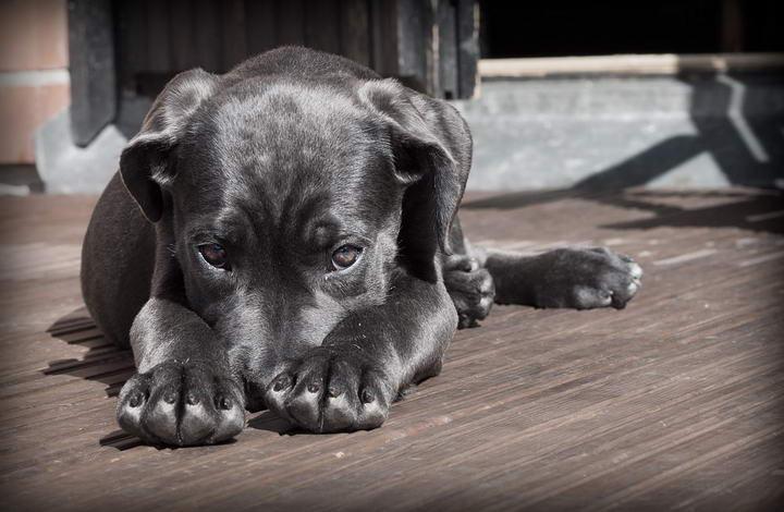 教你通过狗狗的外表来判断它的健康状况