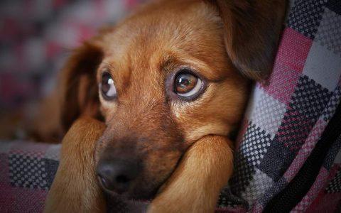 从狗狗便便颜色、软硬看可能有的健康问题