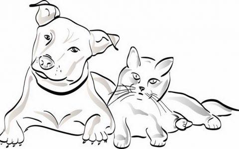 """宠物狗狗猫咪都要特别小""""心""""心脏病"""