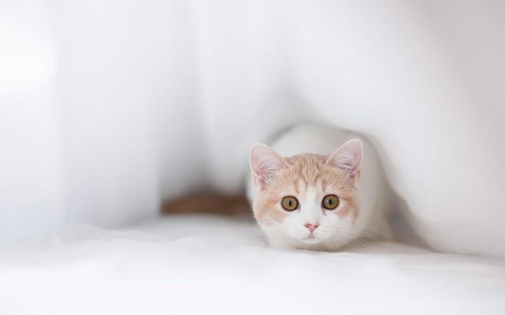 帮助捡来的胆小猫咪更亲人的9个小技巧
