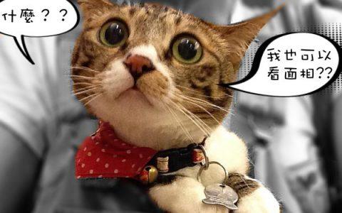 教你给猫看面相:猫咪脸型也能反应猫咪性格
