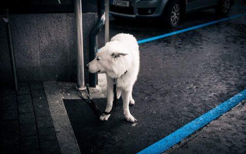 夏天雨后防止狗狗患上钩端螺旋体病