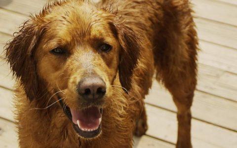 狗狗和猫咪不停咳嗽打喷嚏的原因:八大宠物常见呼吸道疾病
