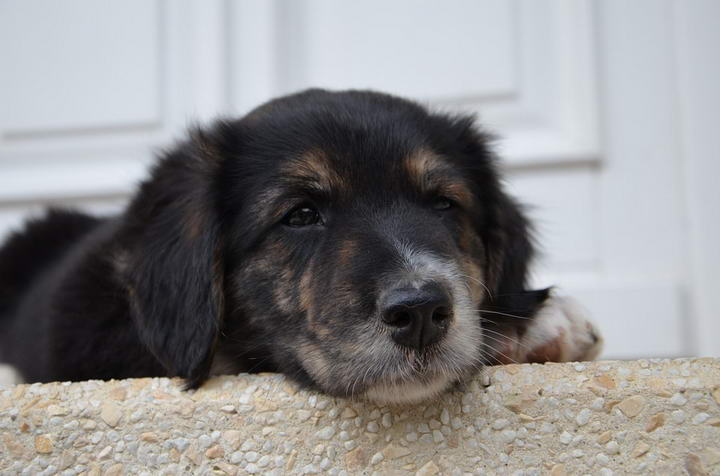 三点症状判断狗狗是否已经过敏