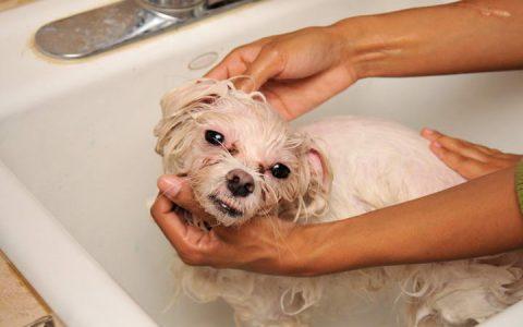 狗狗常见的3大过敏原