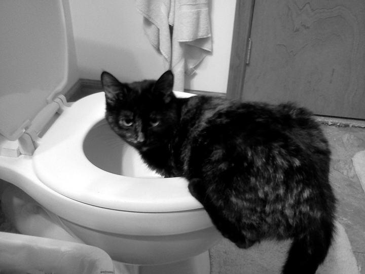 为什么猫咪经常性的呕吐?