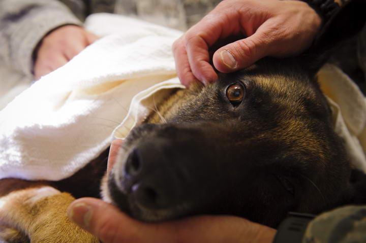 狗狗绝育的好处,宠物狗结扎以后会减少哪些疾病