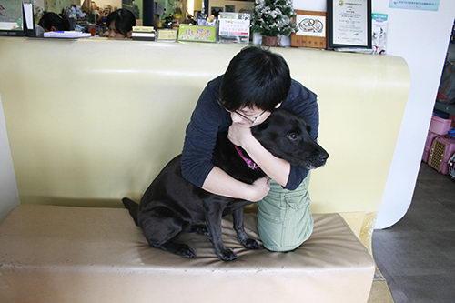 野外游玩时候狗狗受伤后如何安抚狗狗的情绪