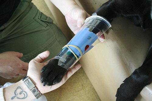 狗狗轻微擦伤、挫伤的包扎处理方法